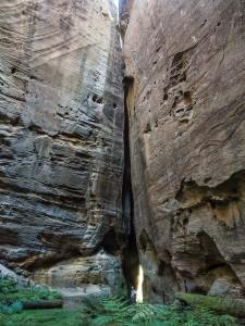 The Amphitheatre Carnarvon Gorge