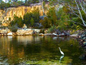 Egret at Abels Bay