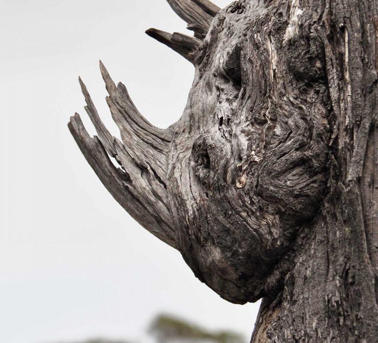 Rhino tree - near Lake Leake. Tasmania